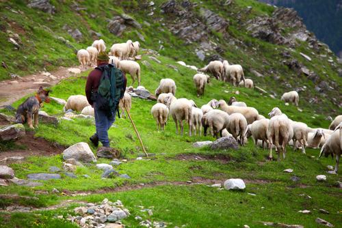 Pastiv vuk i ovce.jpg