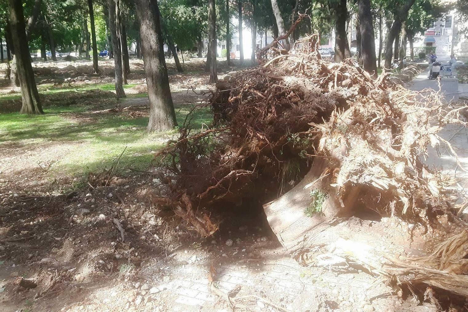 Iskrcena drveca u trebinjskom parku.jpg
