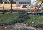 Sječa drveća u Trebinju